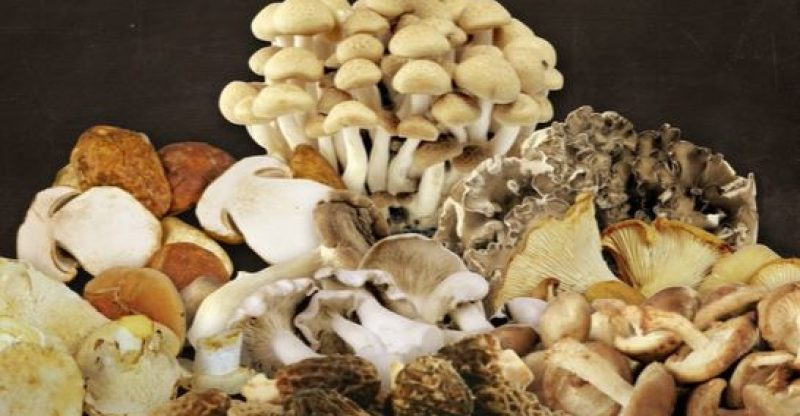 How to Dehydrate Mushrooms in Air Fryer